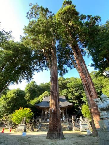 清神社 老杉