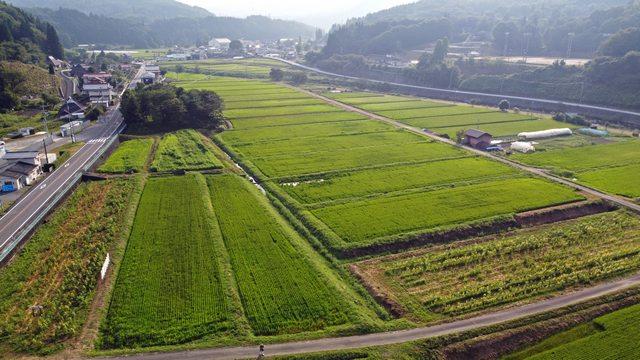 吉和ひまわり畑、広島県廿日市市の田園風景のなかに