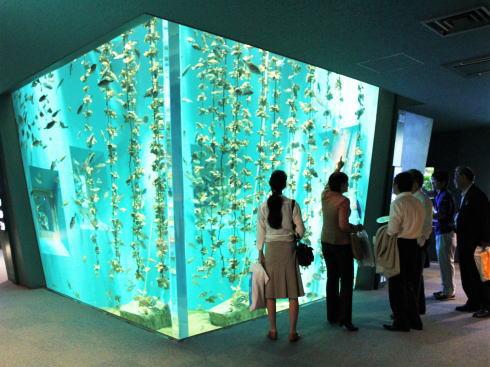 宮島水族館に新施設、演出パワーアップ・新しい仲間も
