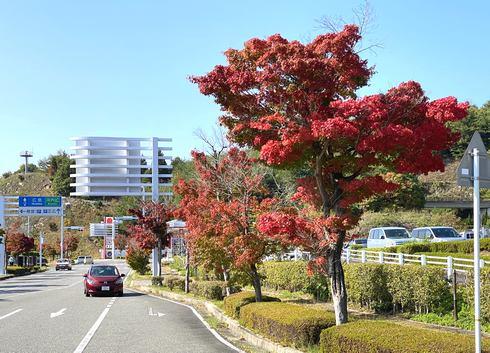 広島空港駐車場の紅葉