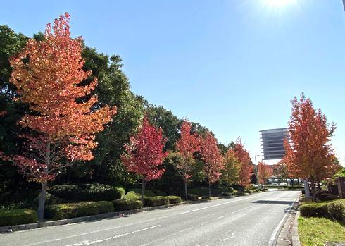 広島空港 周辺の紅葉風景