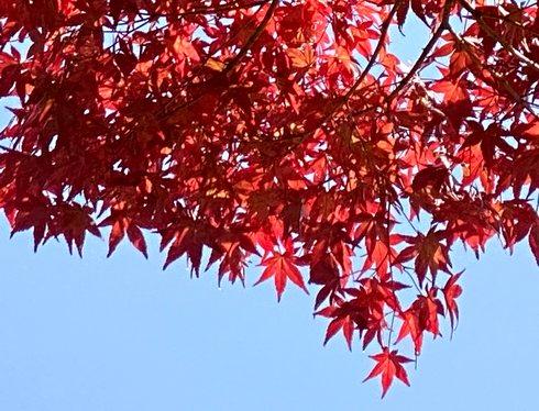 広島県三原市の紅葉がすすむ風景