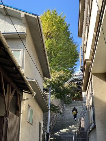 下蒲刈町 弘願寺(ぐがんじ)のイチョウ2