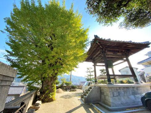 下蒲刈町 弘願寺(ぐがんじ)、石畳の先の隠れたイチョウスポット