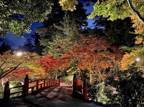 宮島・紅葉谷公園で初ライトアップ、カラフルに浮かび上がる紅葉みごろ