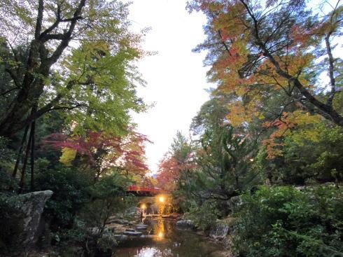 宮島 紅葉谷公園 もみじのライトアップ 画像1