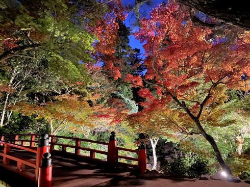 宮島 紅葉谷公園 もみじのライトアップ 画像3