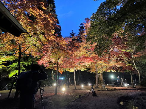 宮島 紅葉谷公園 もみじのライトアップ 画像6