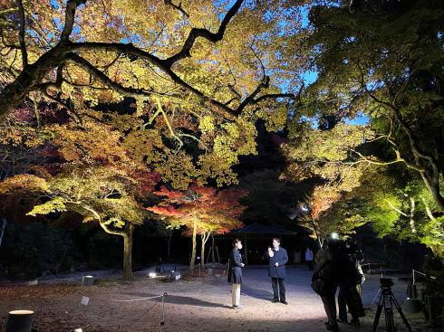 宮島 紅葉谷公園 もみじのライトアップ 画像5