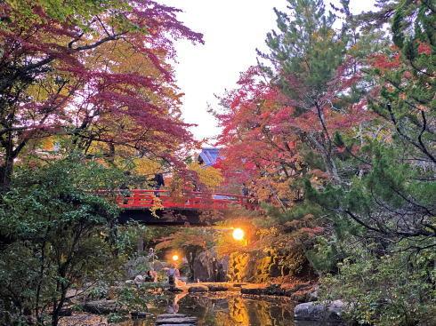 宮島 紅葉谷公園 もみじのライトアップ 画像2