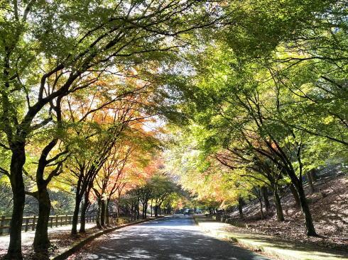 広島県緑化センターの紅葉 モミジのトンネル