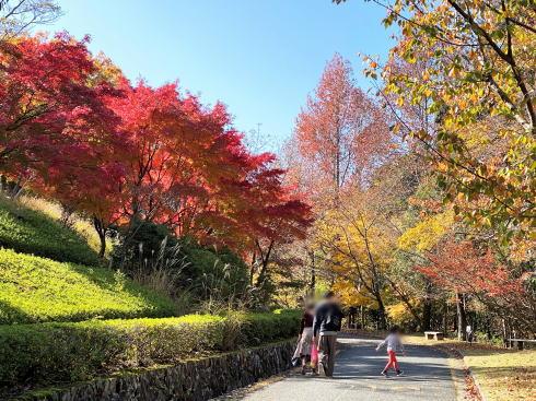 広島県緑化センターの紅葉 画像4