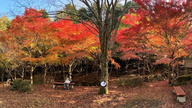 広島県緑化センターの紅葉 画像7