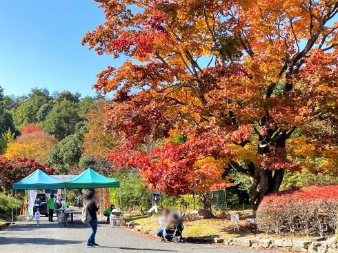 広島県緑化センターの紅葉 オオモミジ2