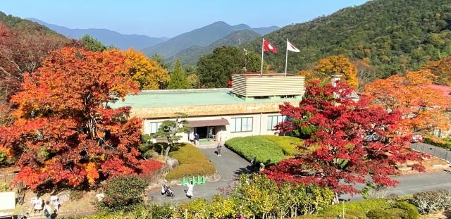広島県緑化センターの紅葉 オオモミジ
