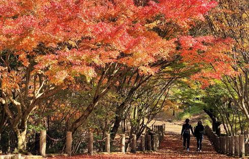 広島県緑化センターの紅葉 画像1