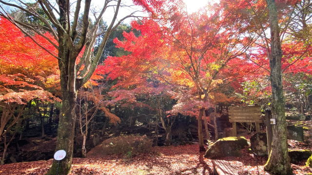 広島県緑化センターの紅葉 画像3