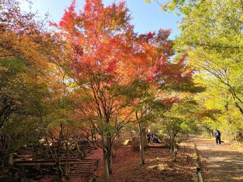広島県緑化センターの紅葉 画像2