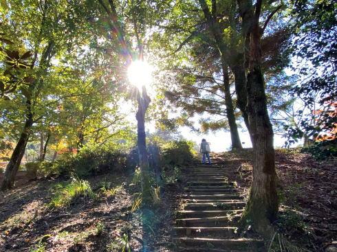 広島県緑化センターの紅葉 画像5