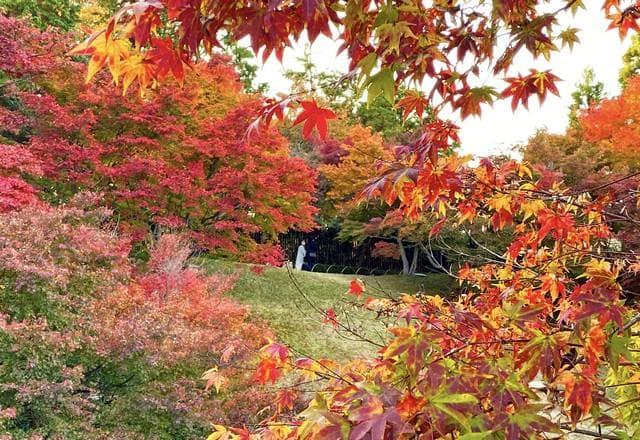 三景園もみじまつり、紅葉が見頃に