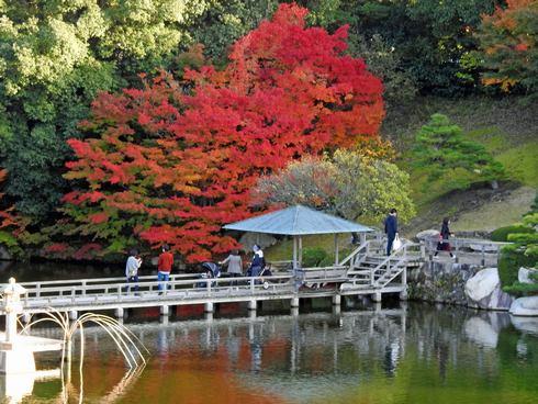 三景園の紅葉、見頃の園内の様子