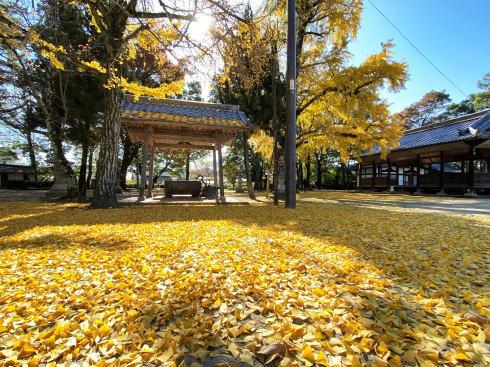 福山市 素盞嗚神社の紅葉したイチョウ 画像2