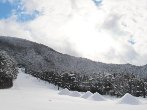 スノーリゾート猫山 スキー場の様子