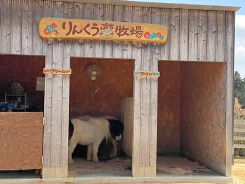 八天堂ビレッジ りんくうプチ牧場01