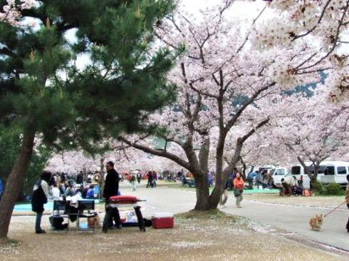 錦帯橋、桜の季節はBBQも楽しい!禁止エリアとマナーに注意