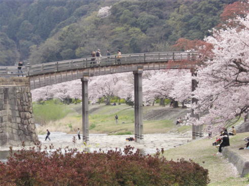 錦帯橋 桜の風景