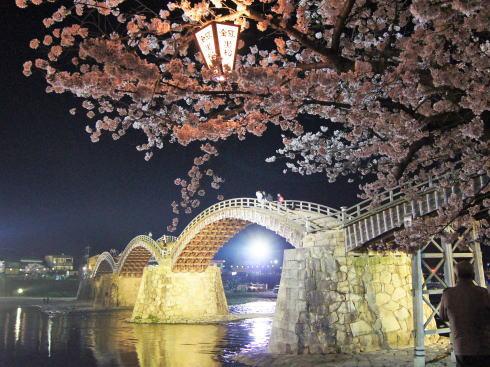錦帯橋と桜同時ライトアップ、時間ごとに色も変化