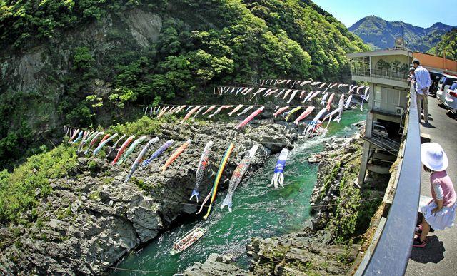 吉野川を泳ぐ、春の恒例「こいのぼり」