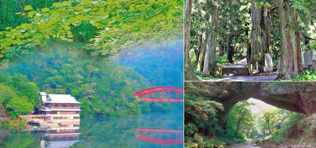 リフレッシュしに行こう!パワースポットや1000年超えの巨樹・新緑体感へ