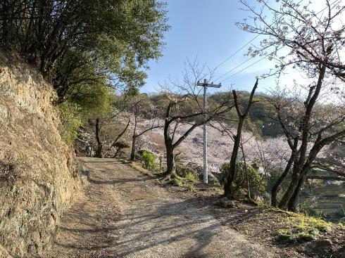 福山市 建部神社 桜の広場へと続く道