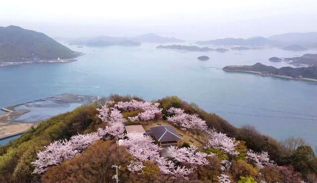 筆影山(ふでかげやま)の山頂展望台と桜