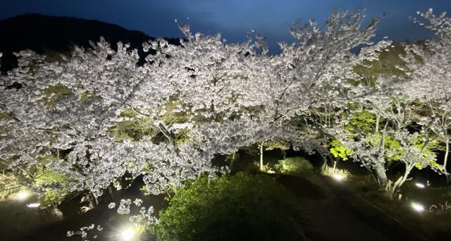 筆影山展望台から見る桜のライトアップ