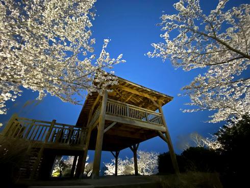 筆影山の夜桜ライトアップ