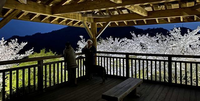 筆影山の展望台と夜桜ライトアップ