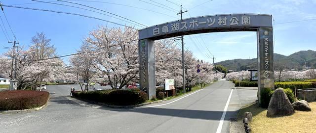白竜湖スポーツ村公園の入口と満開の桜