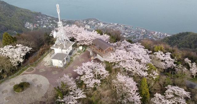 竜王山(広島県三原市)の山頂展望台と桜