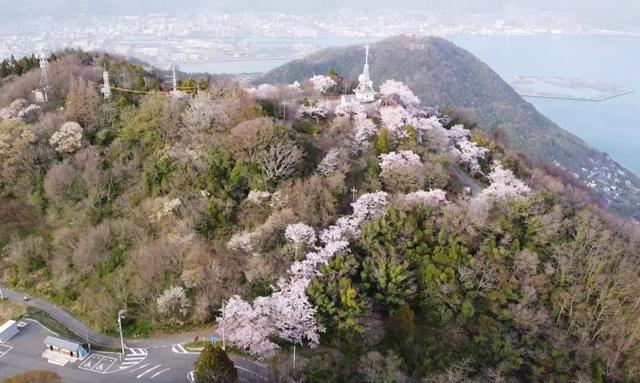 竜王山(りゅうおうざん)の山頂展望台と桜