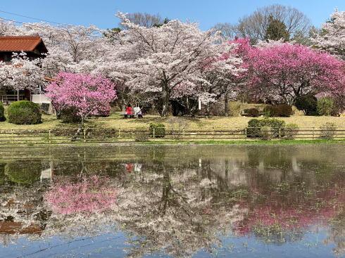 棲眞寺公園、広島空港そばに桜の癒しスポット