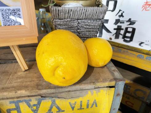 怪獣レモン 画像