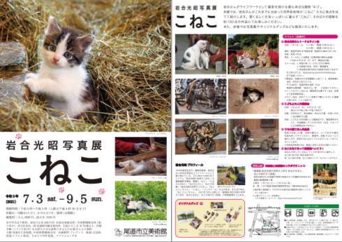 岩合光昭写真展「こねこ」、猫のまち・尾道市立美術館で開催