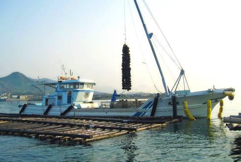 広島で牡蠣の水揚げ
