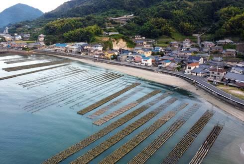 広島のカキ養殖場 牡蠣の抑制棚