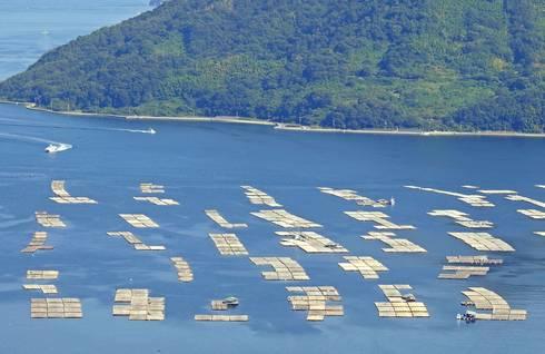 広島のカキ養殖場、牡蠣筏(かきいかだ)